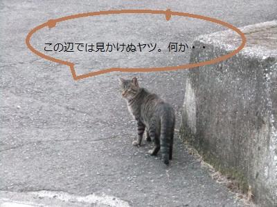 002+1_20101126101306.jpg