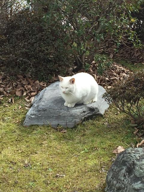 しろねこ in the garden
