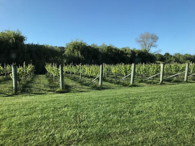 villa maria 201811 vinyard2