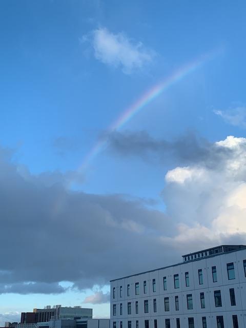 nz isolation hotel day12 rainbow